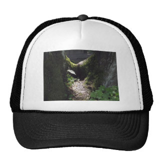Light in the Forest Trucker Hat