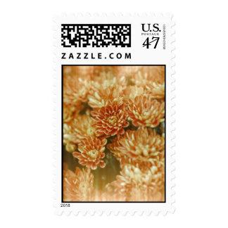 Light Leak Orange Chrysanthemums Postage