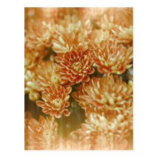 Light Leak Orange Marigolds Postcard