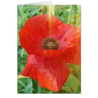 Light Leaks Red Poppy Card