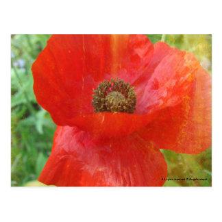 Light Leaks Red Poppy Postcard
