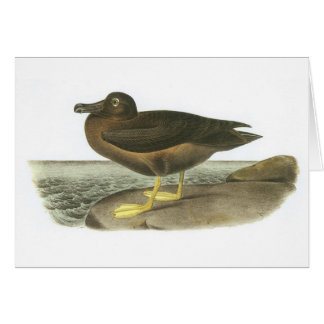 Light-mantled Sooty Albatross by Audubon Greeting Cards
