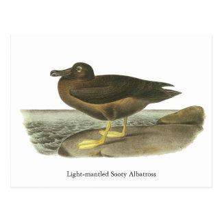Light-mantled Sooty Albatross, John Audubon Postcard