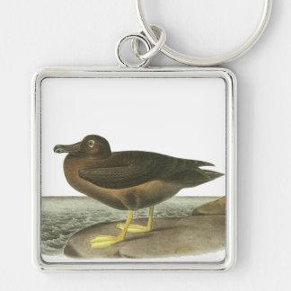 Light-mantled Sooty Albatross, John Audubon Silver-Colored Square Keychain