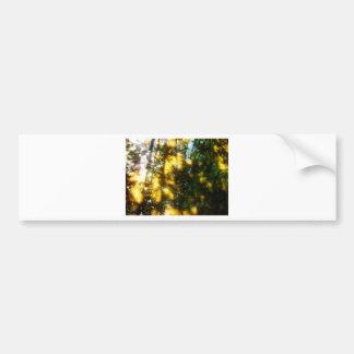 Light messengers bumper stickers