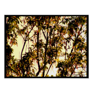 Light of Dawn thru Maple Boughs, Leaves, Flowers Poster