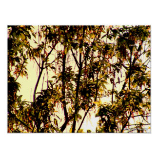Light of Dawn thru Maple Branches, Leaves, Flowers Poster
