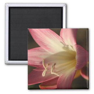 Light of Life 2 Inch Square Magnet
