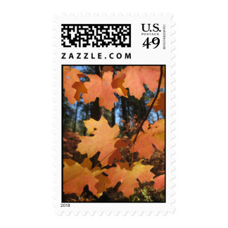 Light on the Leaves (11) Postage Stamp