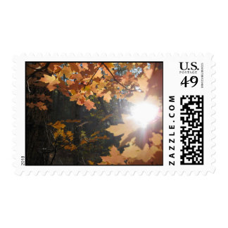 Light on the Leaves (3) Postage Stamps