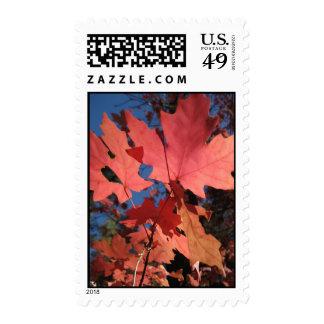 Light on the Leaves (7) Postage Stamp