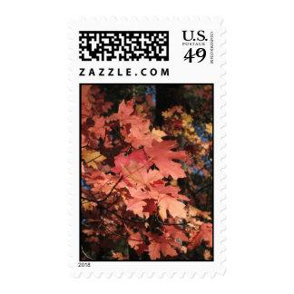 Light on the Leaves (8) Postage Stamp