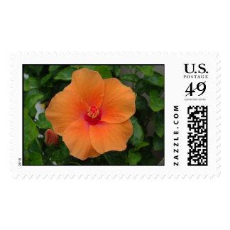 Light Orange Hibiscus stamp