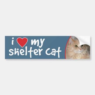 Light Orange Longhair Cat Bumper Stickers/Decals Bumper Sticker