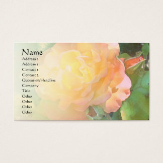 Light Orange Rose Pale Blend Profile Card
