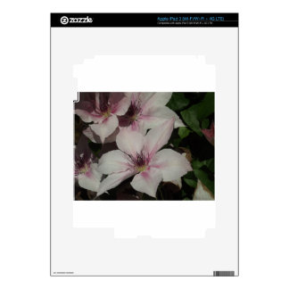 Light Pink Clematis Blossom Decals For iPad 3