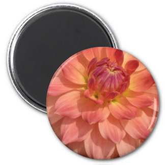 Light Pink Dahlia Petals Motif 2 Inch Round Magnet