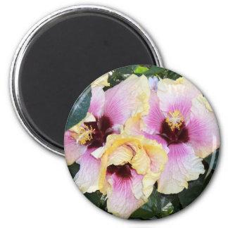 light pink hibiscus 2 inch round magnet