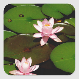 light  pink lotus water lily flower square sticker