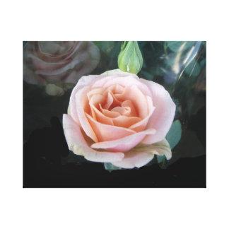 Light Pink Rose Canvas Print