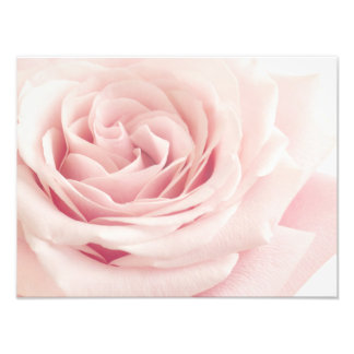 Light Pink Rose Flower - Roses Flowers Floral Photographic Print