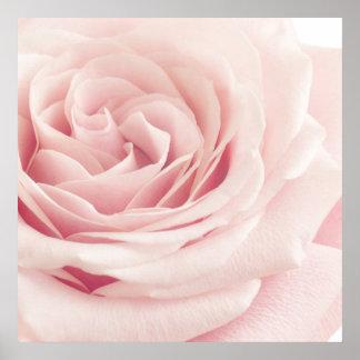 Light Pink Rose Flower - Roses Flowers Floral Poster