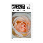 Light Pink Rose Stamps