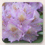 Light Plum Rhododendron in Spring Coaster