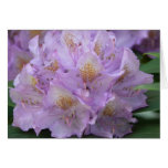 Light Plum Rhododendron in Spring Greeting Card