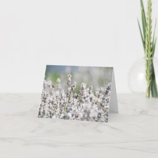 Light Purple Lavender Thank You Card