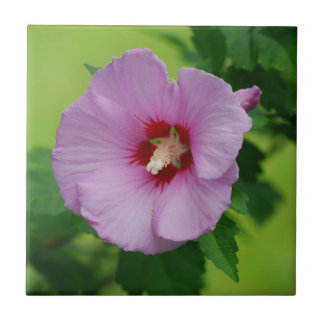 Light Purple Rose of Sharon Ceramic Tile