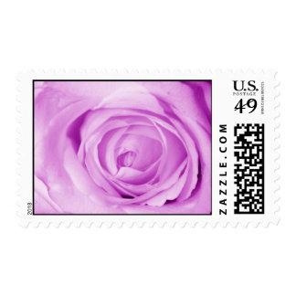 light purple stamp