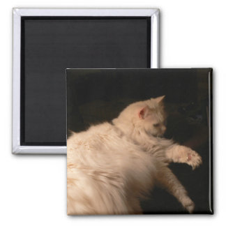 Light & Shadow Cat 2 Inch Square Magnet