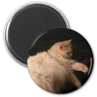 Light & Shadow Cat 2 Inch Round Magnet