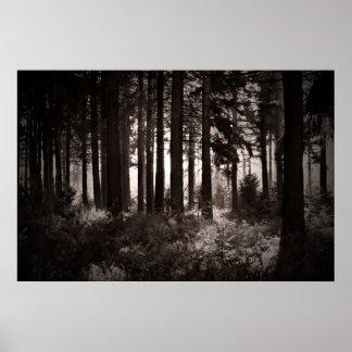 Light Shining Through a Dark Forest Poster