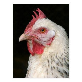 Light sussex chicken postcard