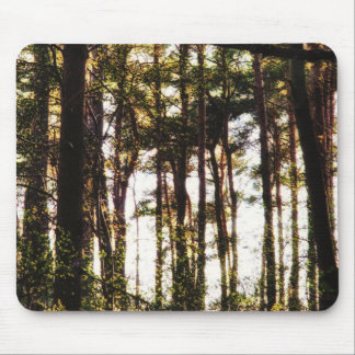 Light Through the Forest Trees Mouse Pad