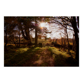 Light Through the Trees Print