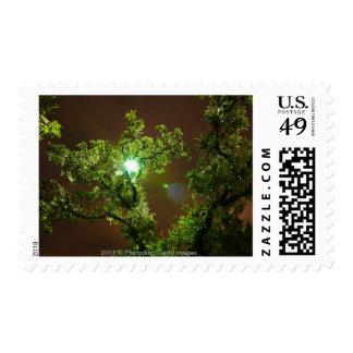 Light Through Trees at night Postage Stamp
