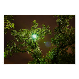 Light Through Trees at night Poster
