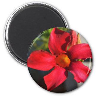 Light Within (Mandevilla) 2 Inch Round Magnet
