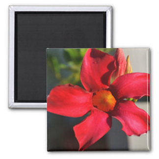 Light Within (Mandevilla) 2 Inch Square Magnet