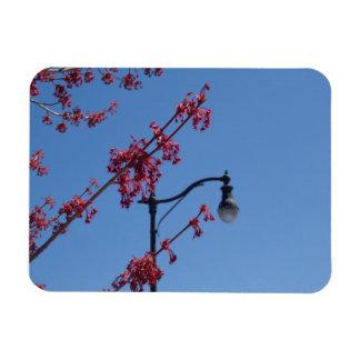 Lighting up Spring Magnet