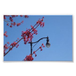 Lighting up Spring Photo Print