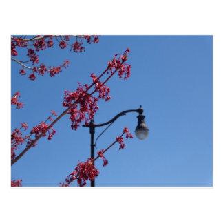 Lighting up Spring Postcard