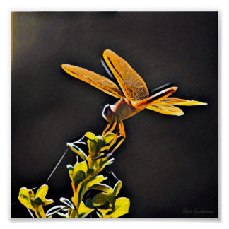 Lightkeeper Dragonfly 7x7 Canvas Poster Print