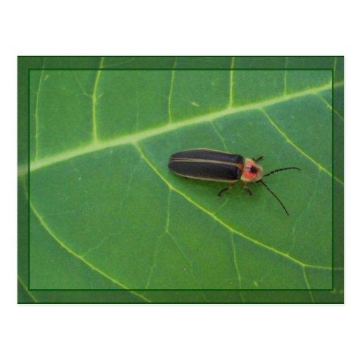 Lightning Bug on Leaf Postcard