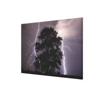 Lightning Strikes In The Sky Behind A Tree Stretched Canvas Prints