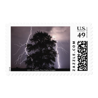 Lightning Strikes In The Sky Behind A Tree Postage
