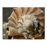 Lightning Whelk Shell Photography Postcard